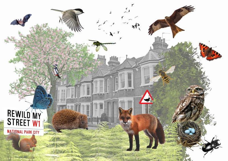 National City Park London, Rewild My Streets