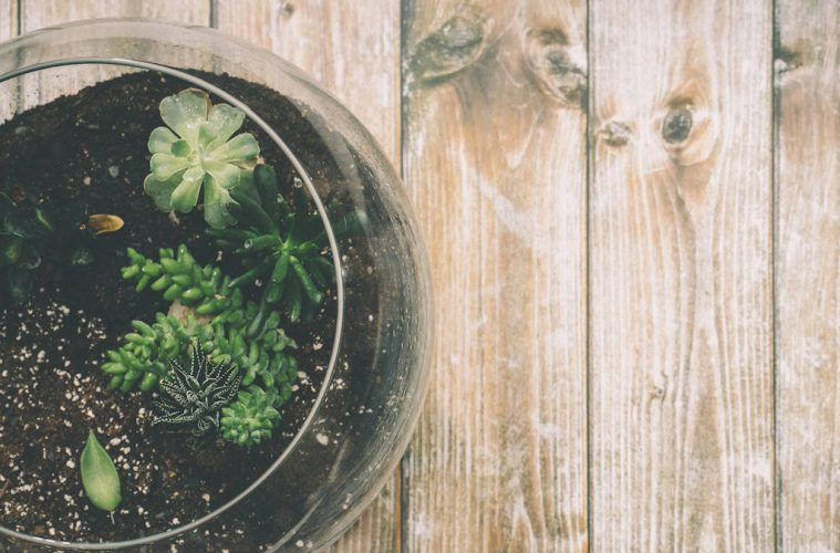 DIY: A Beginner's Guide to Creating Your Own Terrarium