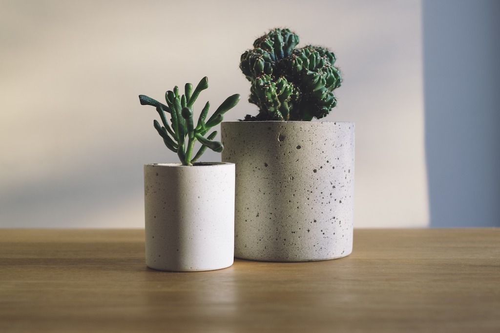 Cacti displayed on a desk