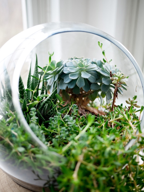 Terrarium display