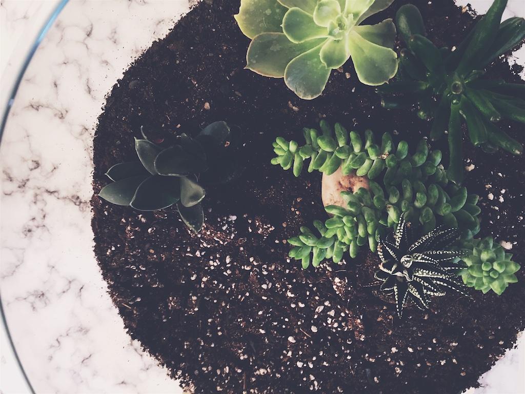 Outdoor terrarium