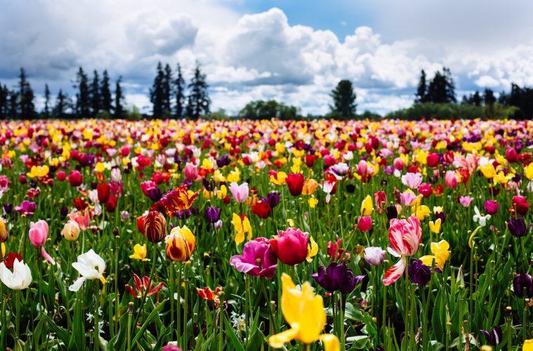 Keukenhof Park Flowers make for stunning travel photography