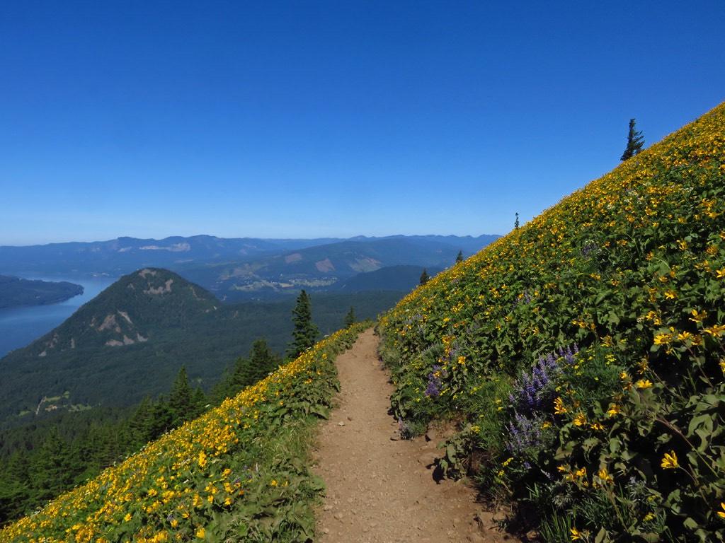 Dog Mountain, Washington