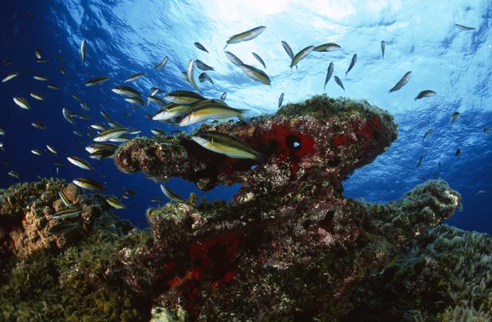 El Hierro Marine Reserve Canary Islands