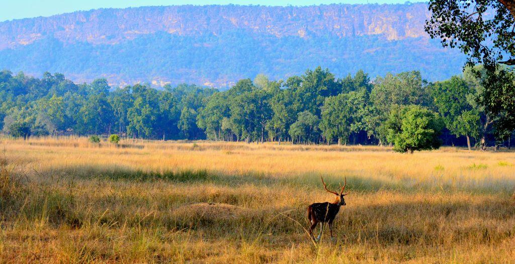 Bandhavgarh National Park in India
