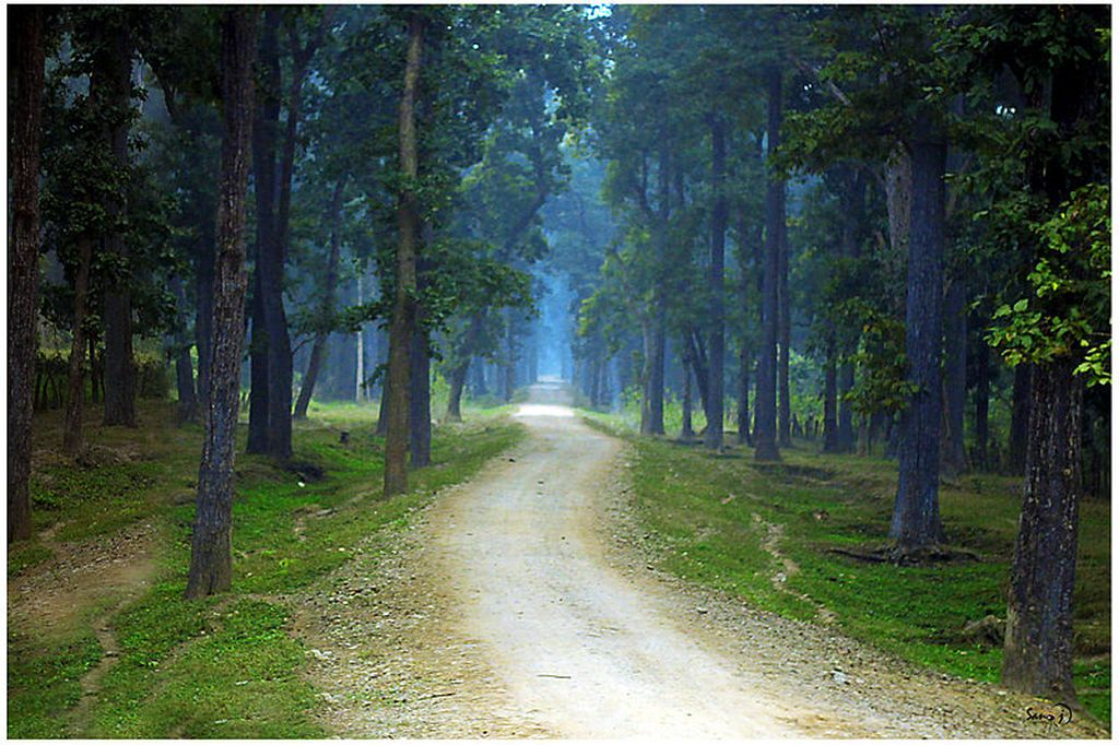 Bardia National Park in Nepal