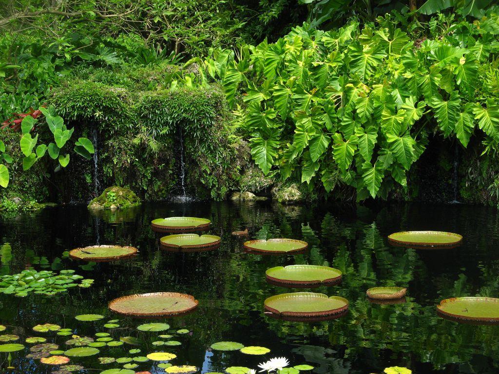 Fairchild Tropical Botanic Garden in Florida
