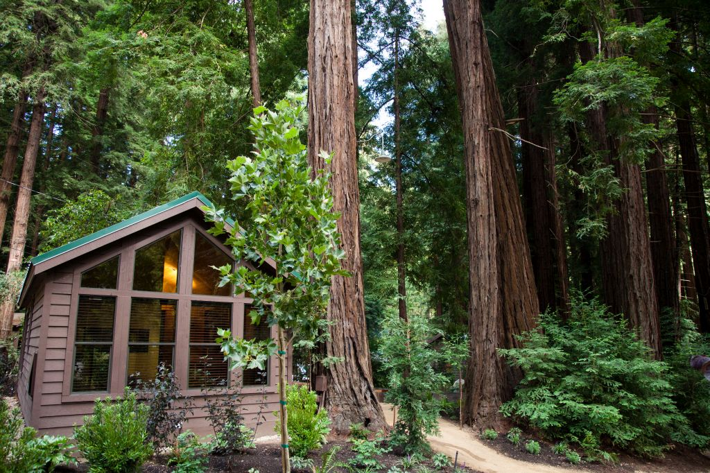 Big sur hotels a redwood adventure on the magnificent for Big sur national park cabins