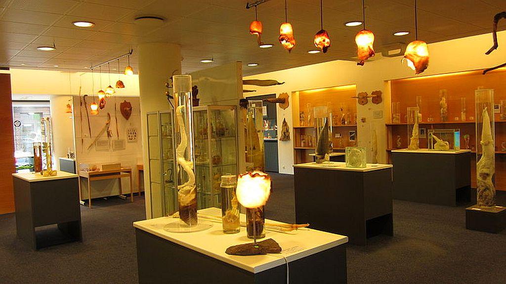 Icelandic Phallological Museum in Iceland