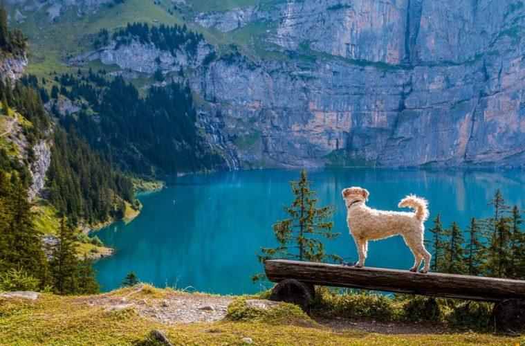 Dog Walking Hiking Adventure Trails