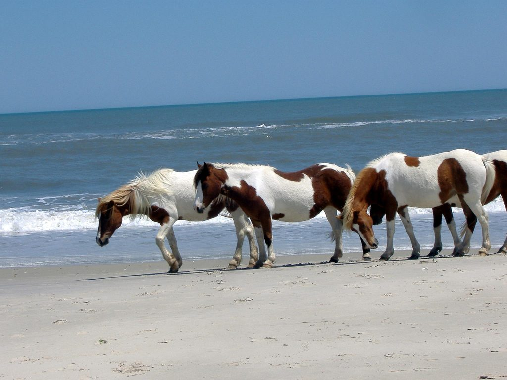 Assateague Island National Seashore, Berlin, Maryland
