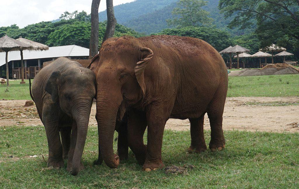 world Elephant day ethical elephant experiences