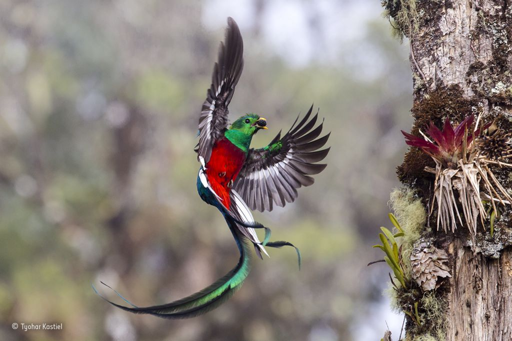 The world's best birdwatching destinations - Ecophiles