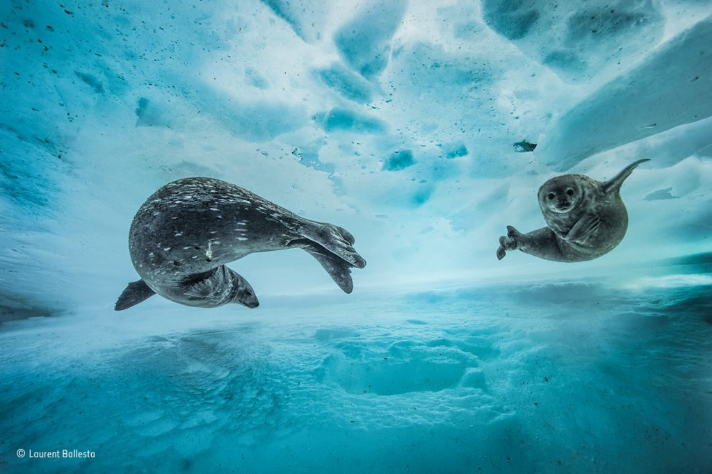 Swim gym © Laurent Ballesta - Wildlife Photographer of the Year - 1024 x 682