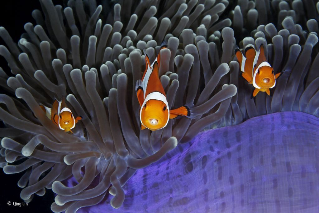 The insiders © Qing Lin - Wildlife Photographer of the Year - 1024 x 682