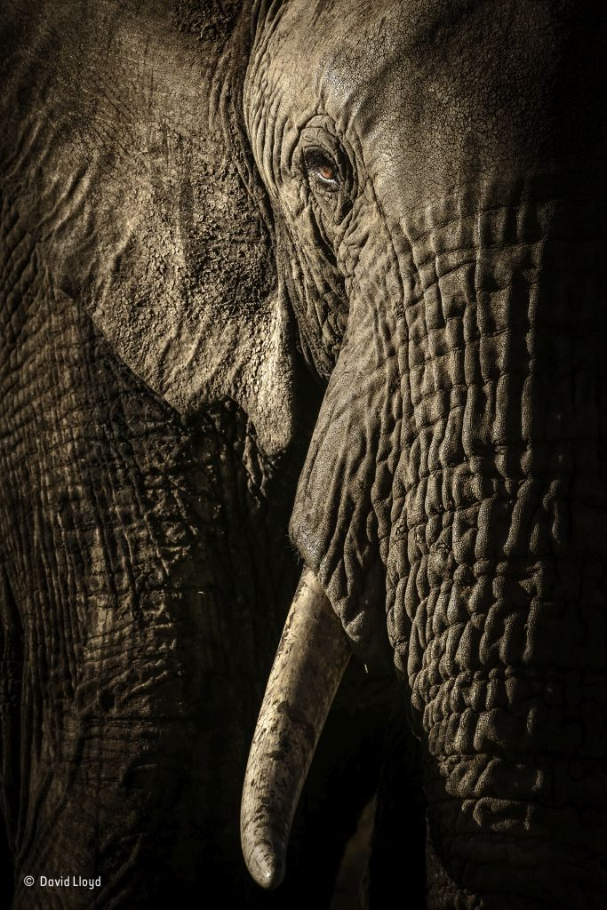 The-power-of-the-matriarch Wildlife-Photographer-of-the-Year