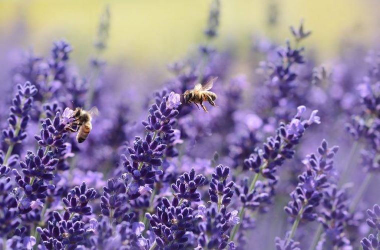 Gardening Tips: The Best Flowers for Bees