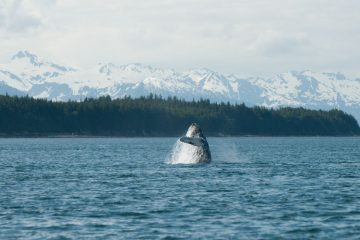 whale watching tours Juneau Alaska