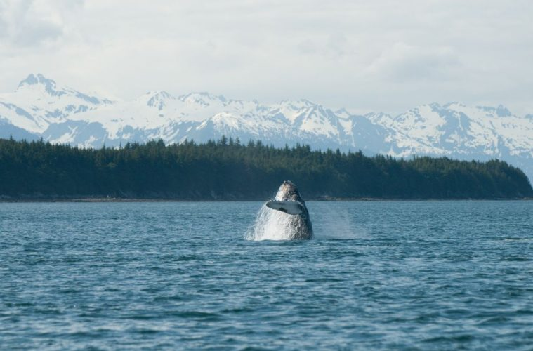 Top Places for Whale Watching in the World