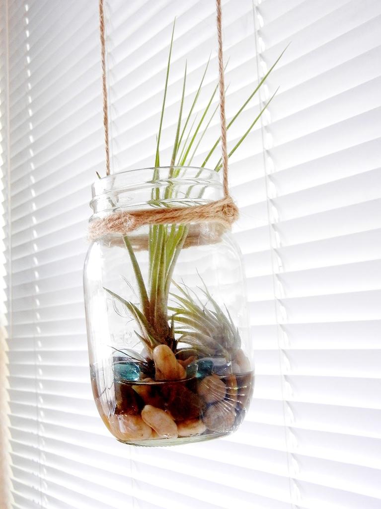 Planting DIY
