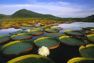 Pantanal, Brazil natural wonders of the world