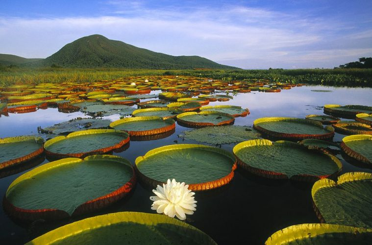 Pantanal, Brazil natural wonders of the world