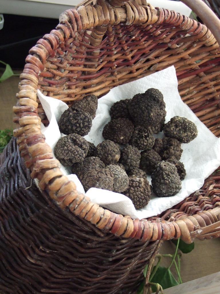 truffles Italy
