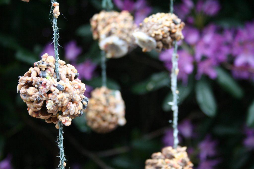diy pine cone bird feeder