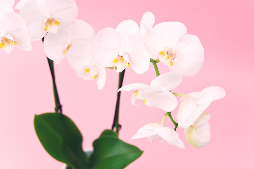 apartment flower