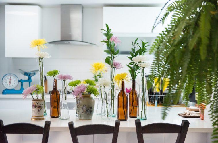 apartment house plants