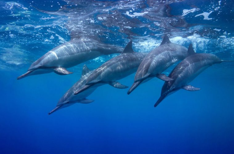 Dolphins whales