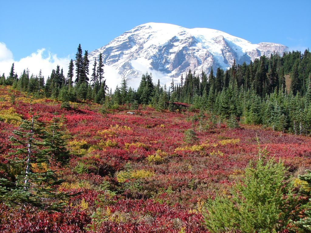 mount rainier buddhist personals At 14,410 feet, mount rainier in washington state naturally grew grander as we drew closer preserved in the nation's fifth oldest national park, the mountain is the tallest volcano in.