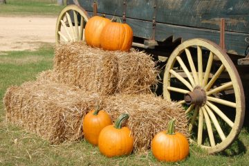 Pumpkin Patch fall festivals Florida