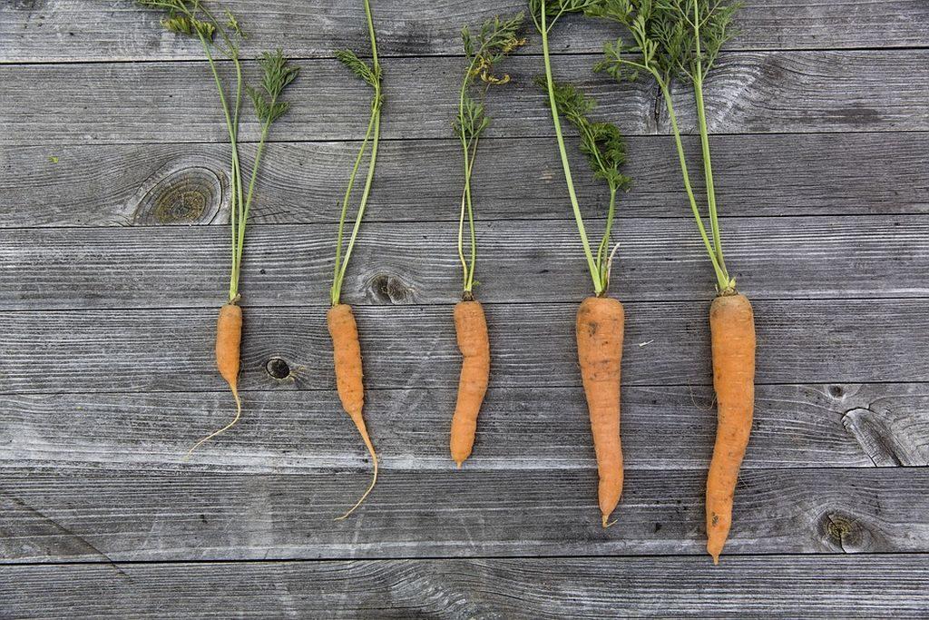 Carrots, Pixabay