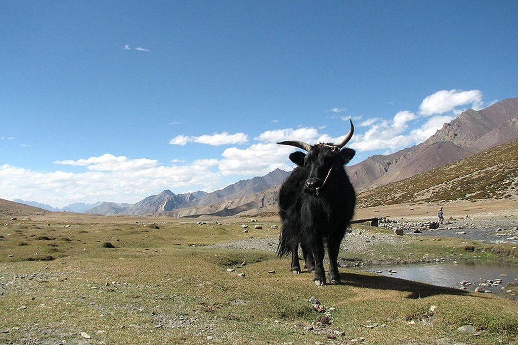 Markha Valley, India