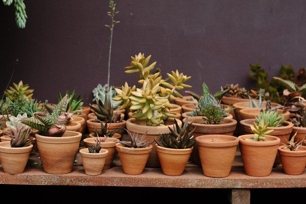 container garden succulents