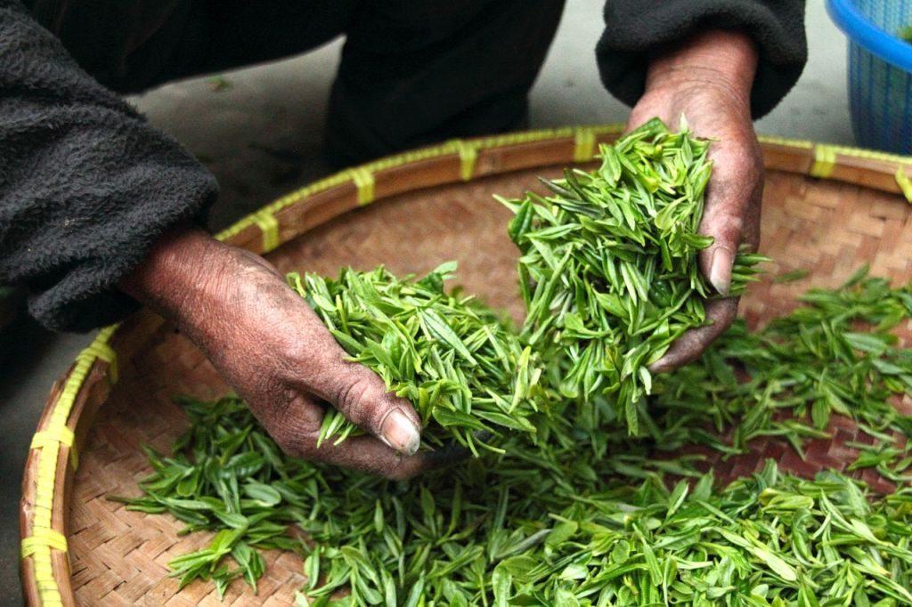 sustainable and organic tea tea leaves in basket