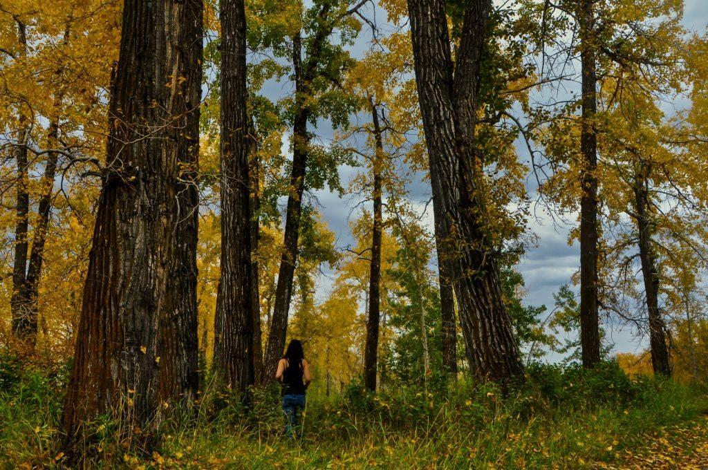 calgary autumn
