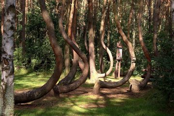 Crooked Forest in West Poland trip
