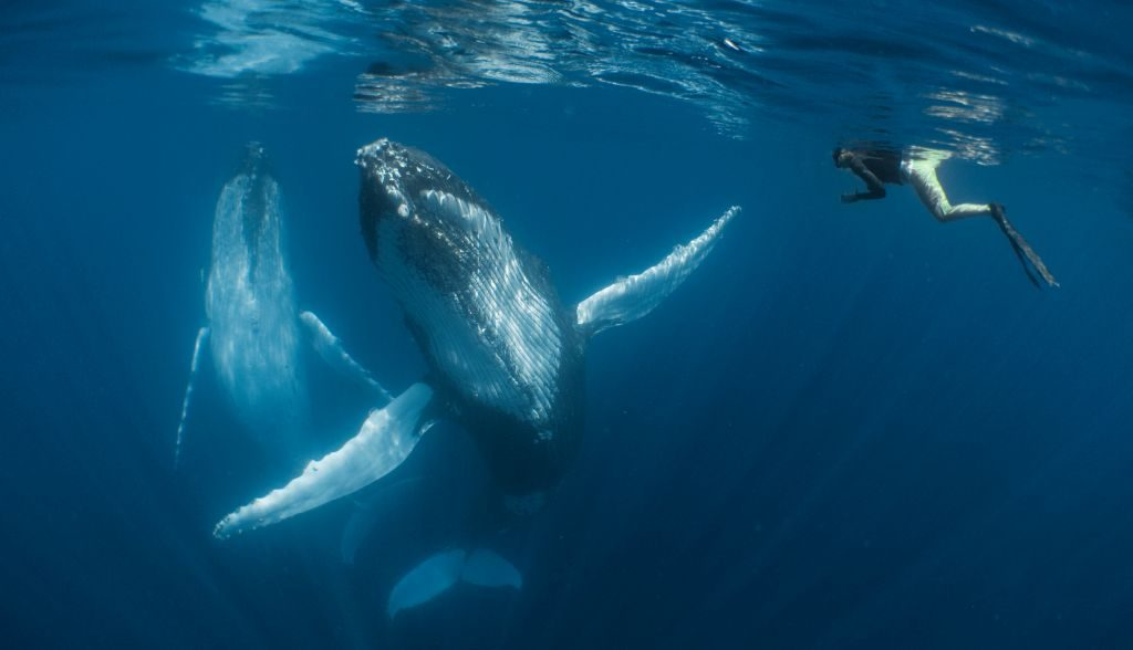 whale diver SimoneMatucci UPY2018 - 1024 x 588