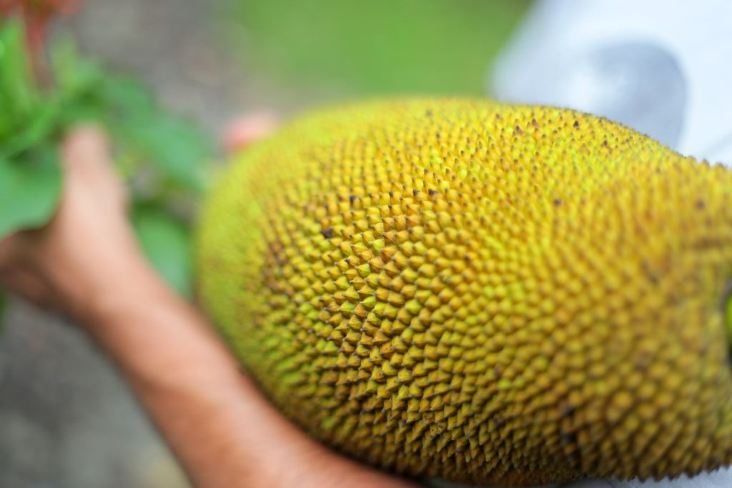 Fruta picos costa rica