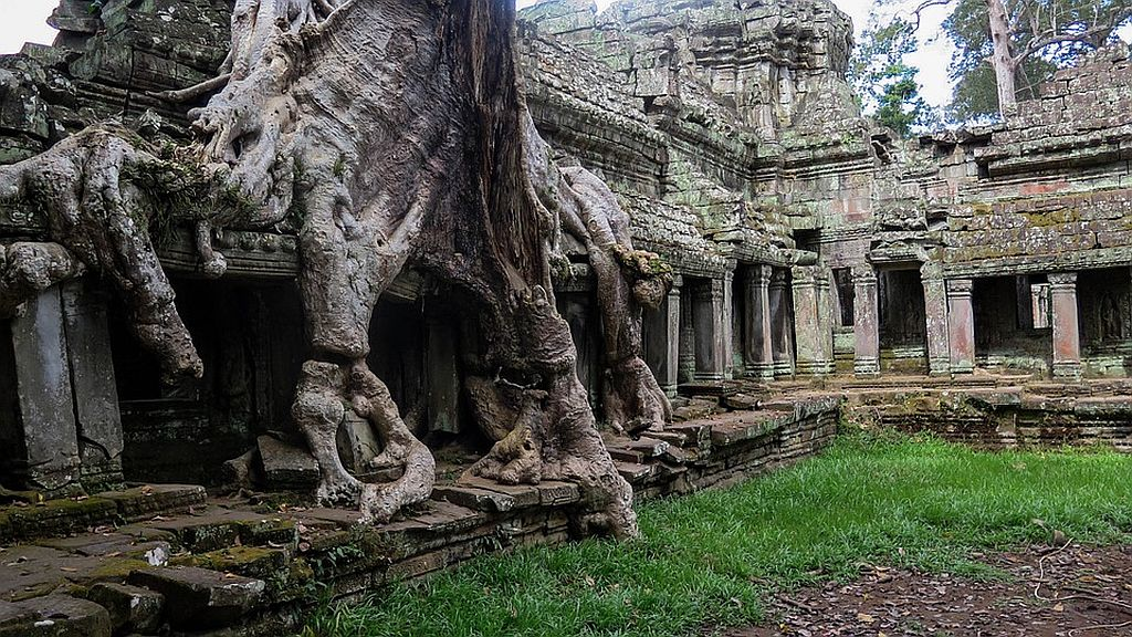 Tree Overgrowth in Cambodia Temples