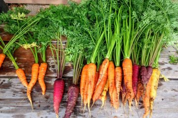 Carrots are easier to grow since their underground, it's all about keeping the soil rich vegetable gardening