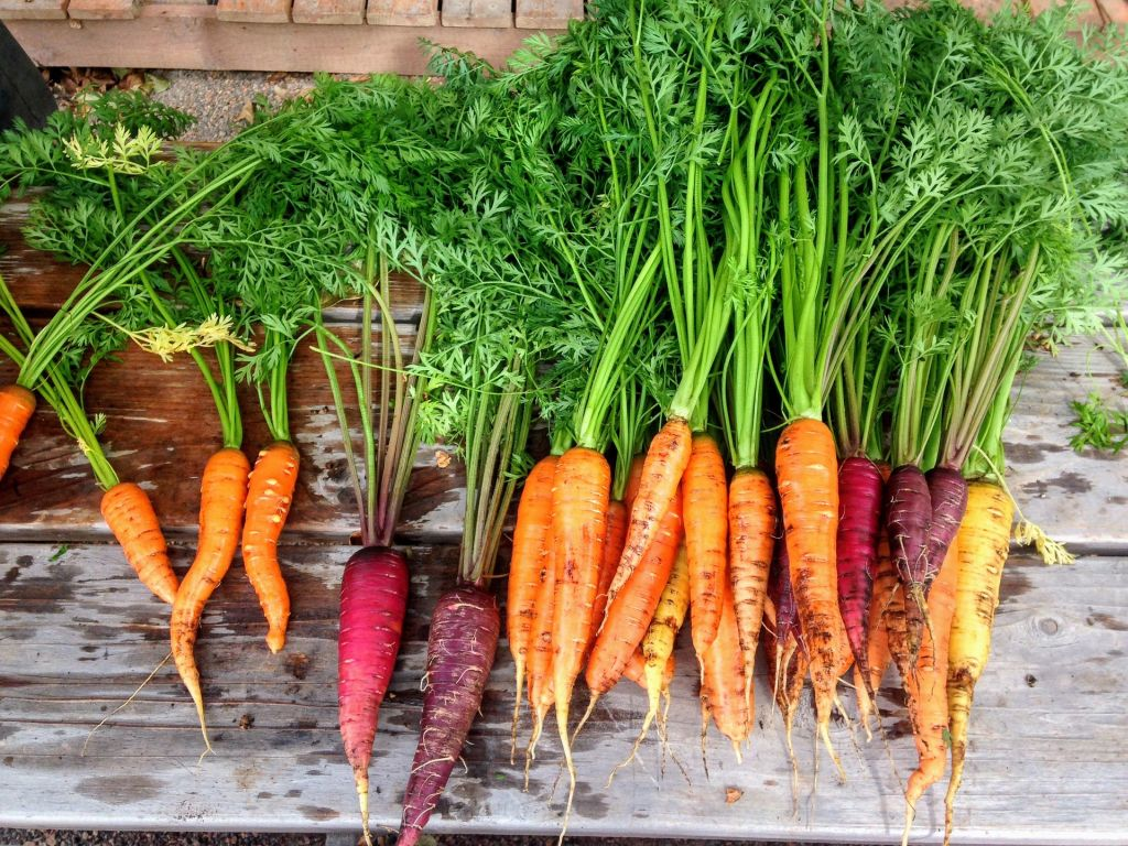 Carrots are easier to grow since their underground, it's all about keeping the soil rich