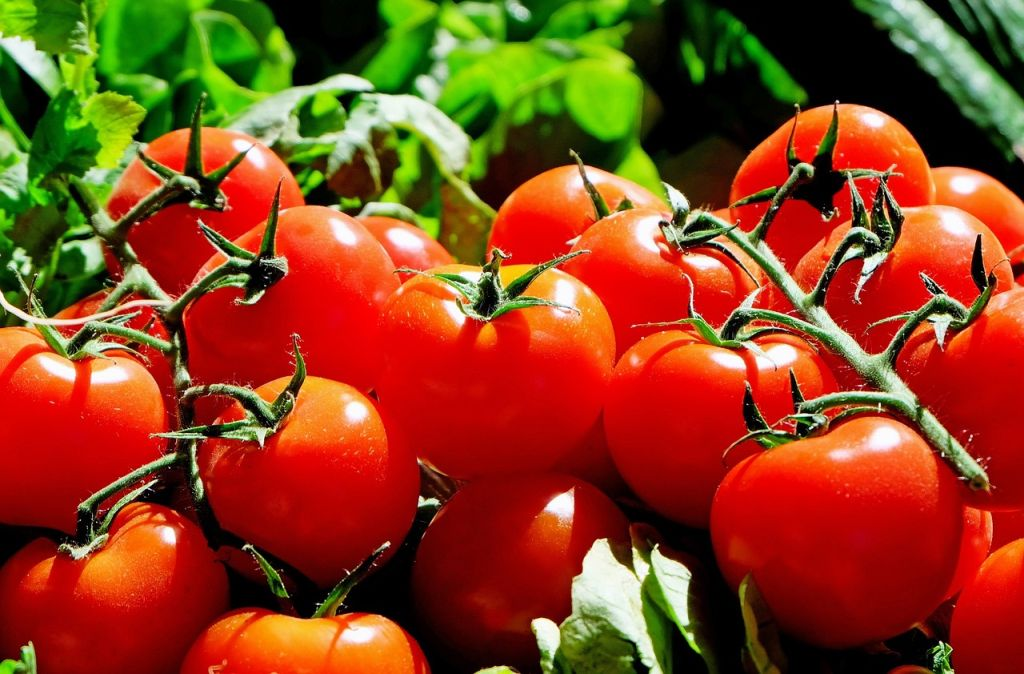 Tomatoes grown fresh taste much sweeter and juicier