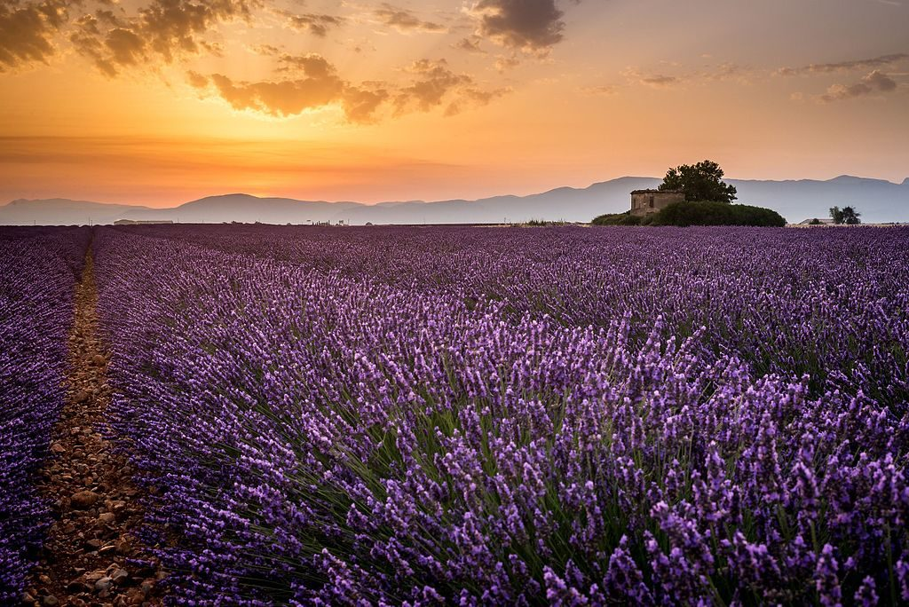 5 Stunning Farms to Visit This Lavender Season - Ecophiles