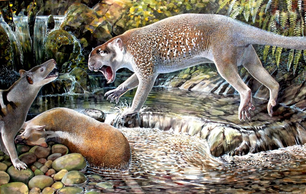 Wakaleo schouteni reconstruction - 1024 x 649 new species lion