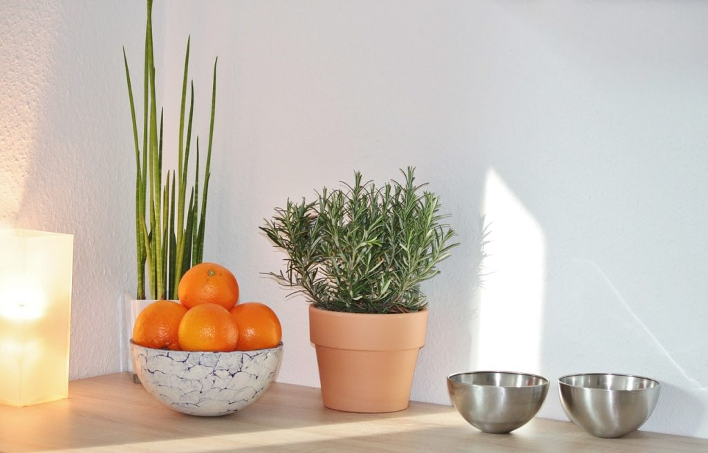 Kitchen herbs/plants with oranges and metal bowls around them