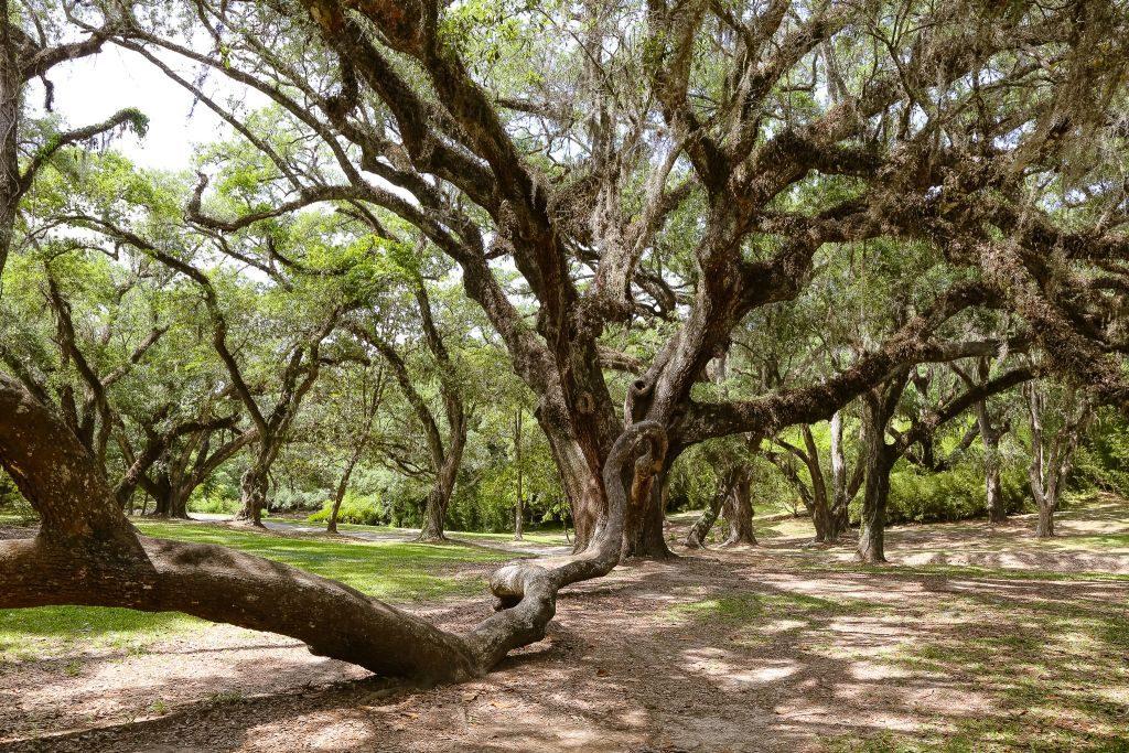 jungle gardens tabasco avery island louisiana - 1024 x 683