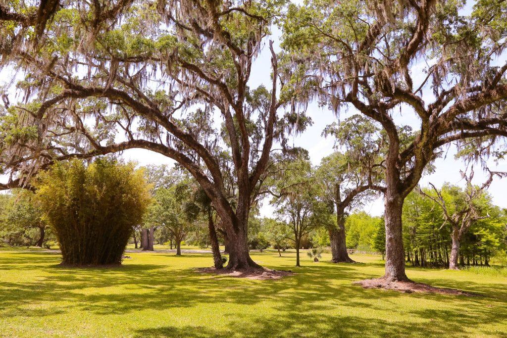 jungle gardens1 tabasco avery island louisiana - 1024 x 683